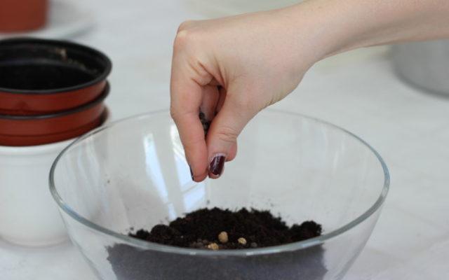 Seed Bombs basteln