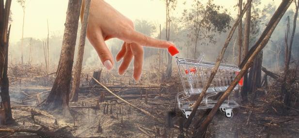 Palmöl – die tägliche Urwaldzerstörung beim Einkauf