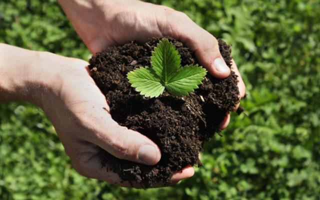 gartengestaltung naturnah: 10 tipps für biogarten & naturgarten, Garten dekoo