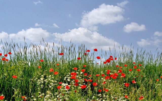 gartengestaltung naturnah: 10 tipps für biogarten & naturgarten,
