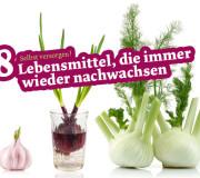 Selbst versorgen: Lebensmittel Gemüse nachwachsen lassen
