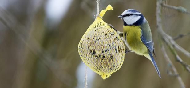 Vögel füttern: Tipps