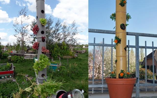 Eigenes Gemüse Auch Ohne Garten Utopiade