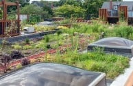 Neue Häuser müssen in Frankreich künftig Dachgärten haben