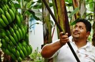 Fair Trade Studie: Essen ist Macht