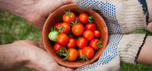 Urban Gardening: Gemüse ohne Garten