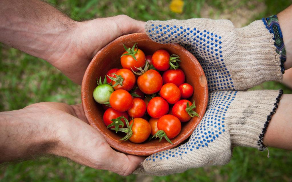 Urban Gardening: Garten teilen, Selbstversorgung