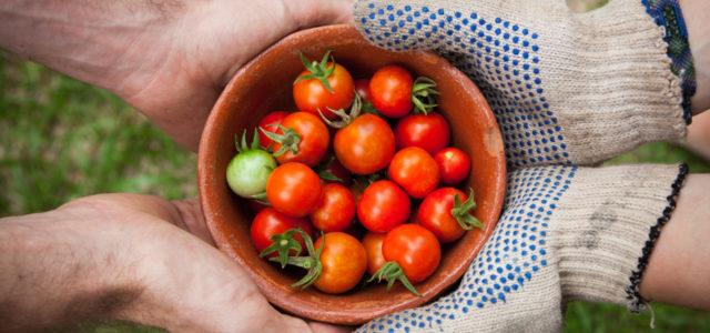 Urban Gardening: Garten teilen