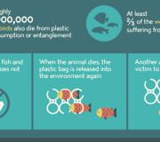 Plastikmüll zerstört unsere Meere