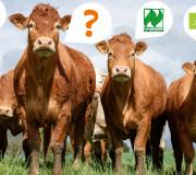 Bio-Siegel: Was haben die Tiere davon?