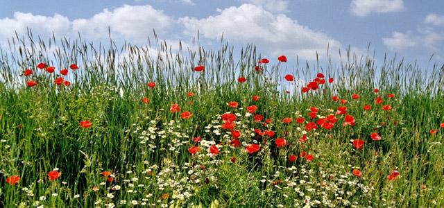 Bio-Garten: naturnah und ökologisch