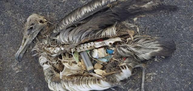 Plastikmüll im Meer: tödliche Gefahr für Seevögel