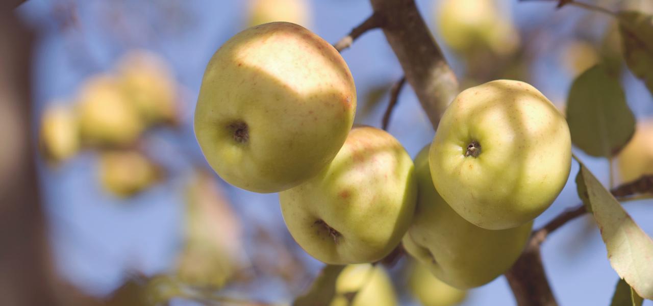 Der Saisonkalender zeigt, wann welches Obst und Gemüse Saison hat