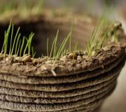 Greenprint: Grünes selber drucken