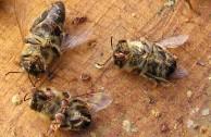 Bienensterben – was kann ich dafür?