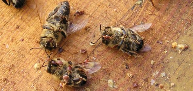 Bienensterben - was kann ich dafür?