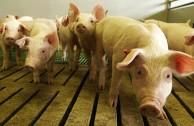 Tierfabrik Deutschland: ZDF-Special über Billigfleisch und Wegwerfküken