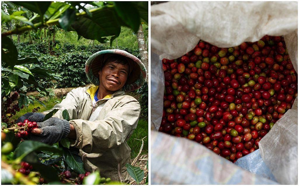 Kann mit Fair-Trade-Kaffee besser entlohnt werden: Kaffeebauer der Koperasi Baithul Qiradh Baburrayyan (KBQB) in Indonesien
