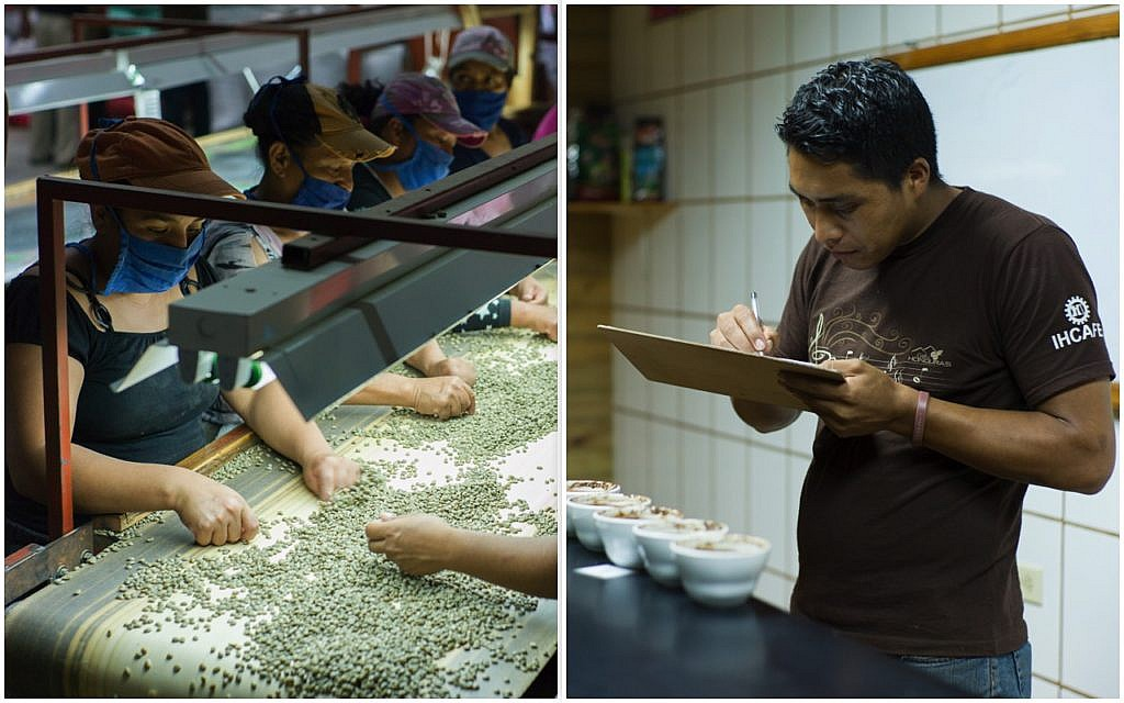 Fairtrade-Kaffee-Verarbeitung: hier in der honduranischen Kaffee-Kooperative COMSA