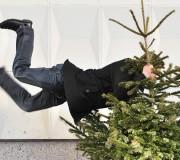 Weihnachtsbaum-Alternativen: bio, regional oder mieten
