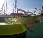 Projekte gegen Plastikmüll im Meer: Seabin