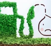 Palmöl im Biodiesel