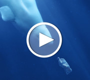 Filmtipp: A Plastic Ocean