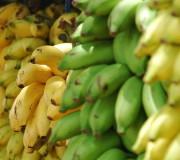 Lidl verkauft zertifizierte Bananen