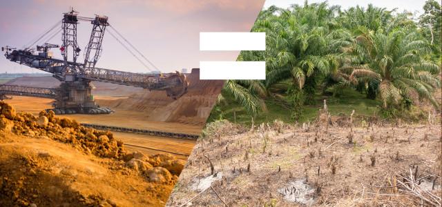 Neue Studie: Palmöl ähnlich problematisch wie Kohle
