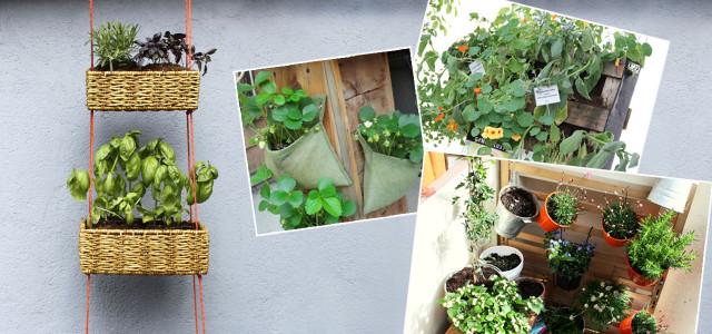 nachhaltig pflanzen so machst du dir richtig sommer auf dem balkon. Black Bedroom Furniture Sets. Home Design Ideas