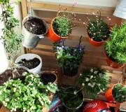 Urban Gardening: Vertikaler Garten aus Blumentöpfen auf dem Balkon