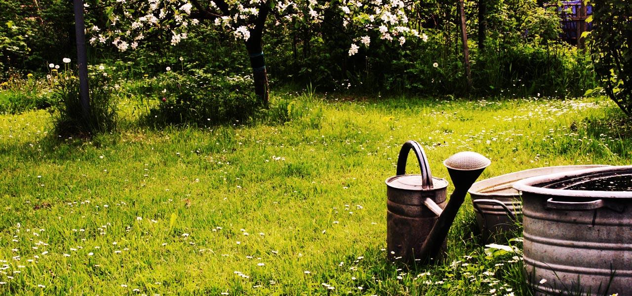 Geliebte Dünger für Pflanzen: ganz natürlich selber machen - Utopia.de #VT_52