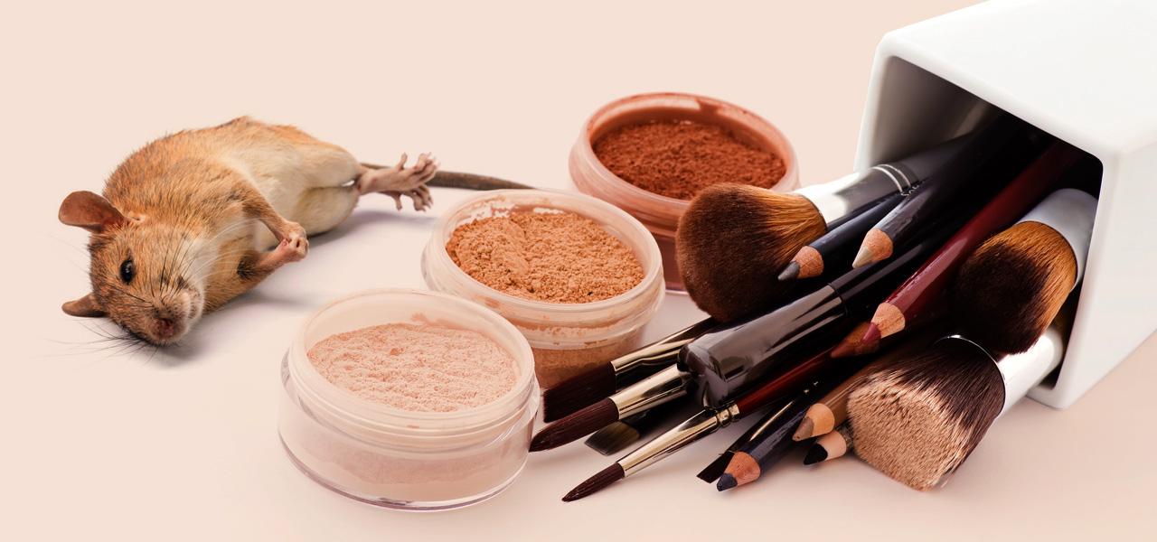 beauty produkte gewinnen kosmetik make up und. Black Bedroom Furniture Sets. Home Design Ideas