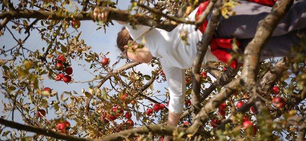 Garten: Die schlimmsten Öko-Sünden beim Gärtnern