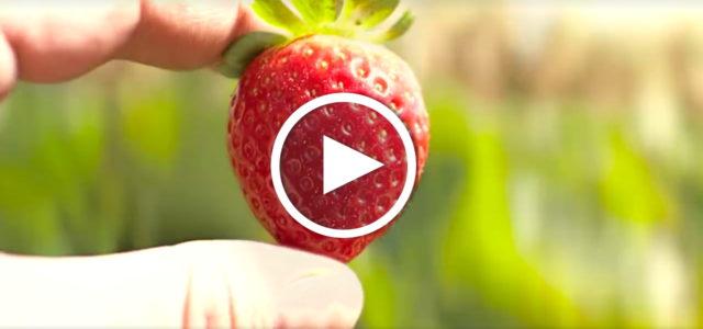 Erdbeere Weg Lebensmittel