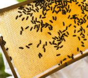 selbser imkern hobby-imkern stadt bienen