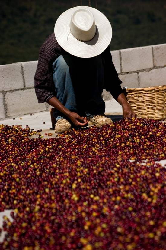 Specialty Coffee wird beim Direct Trade handverlesen