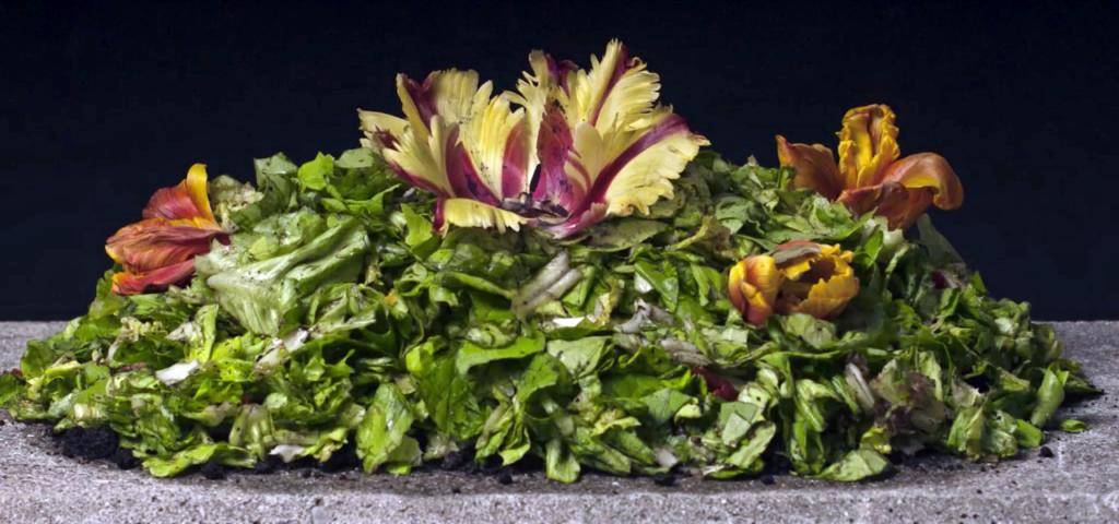 WormUp: Vor dem Kompostieren hat man Biomüll …