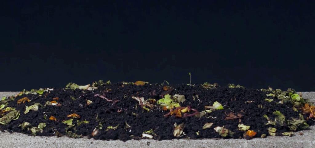 WormUp: Nach dem Kompostieren gibts Humus