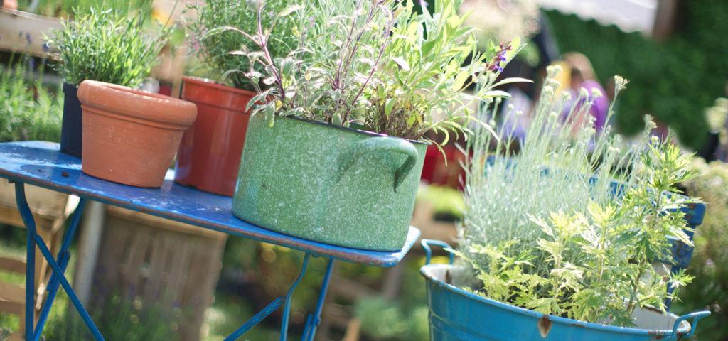 Naturgarten & Biogarten Für Gemüse, Kräuter, Salat & Obst ? Selbstversorger Garten Anlegen Obst Gemuse