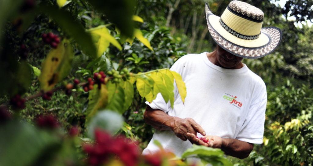 Third Wave Coffee aus direktem Handel von den Kaffeebauern in den Anbauländern