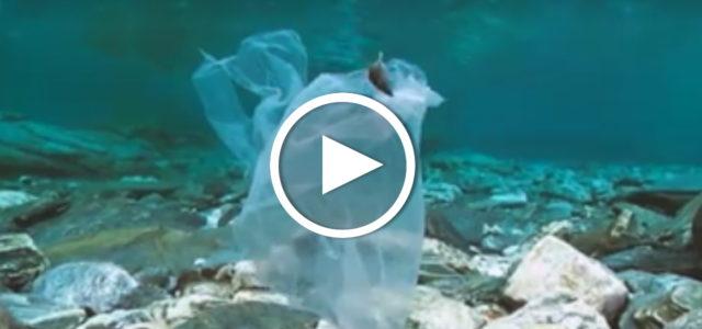 Video Plastikmüll im Meer, in Eruopa und Deutschland