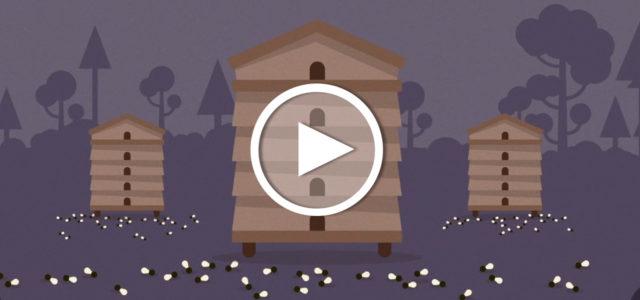 Video: Bienensterben