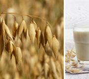 Hafermilch: wie gesund ist sie? Wo kann man sie kaufen? Wie macht man sie selbst?