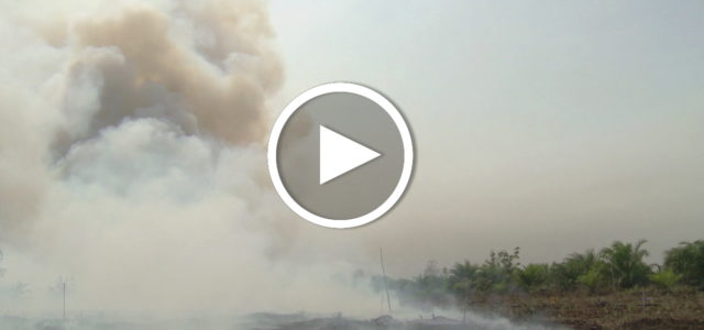 Palmöl Biodiesel Wir tanken Regenwald Doku