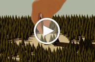 Dieses Video zeigt, was beim Abholzen von Urwäldern passiert