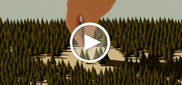 Video: Folgen von Waldrodung