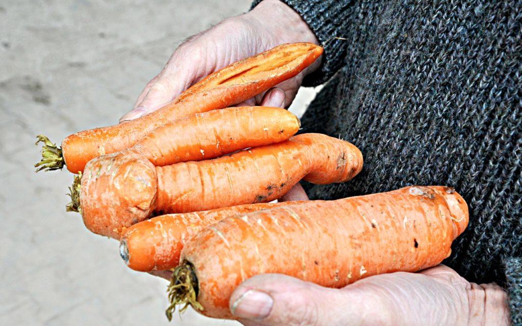 Krummes Gemüse: würde oft einfach aussortiert