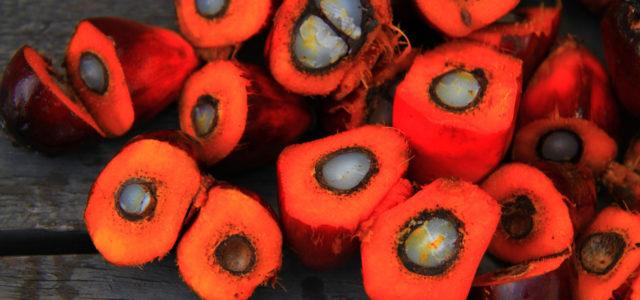 Palmöl: Ist Bio besser?