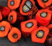 Bio-Palmöl: Ist das die Lösung?